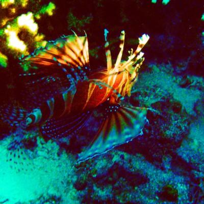 Wunder Unterwasserwelt
